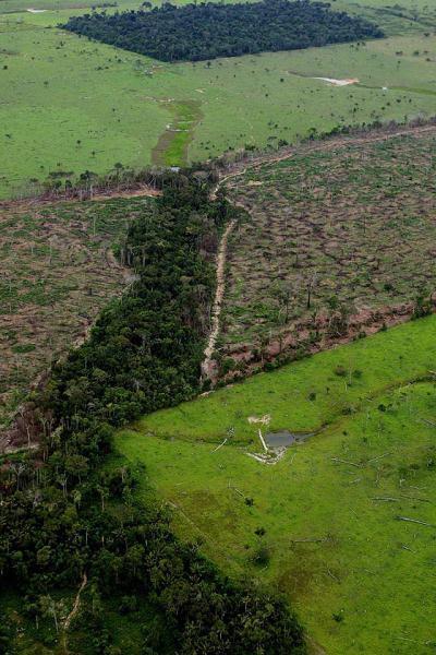Impactos ambientais gerais do agronegócio