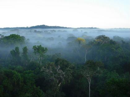 Áreas protegidas na Amazônia evitam um ano de emissões