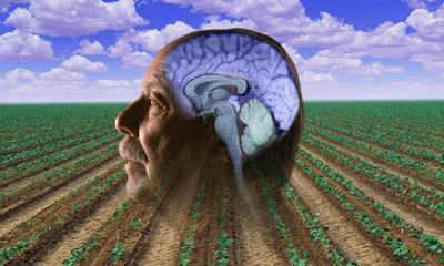 Pesticidas causan Parkinson: descubren otra prueba
