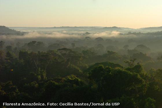 Vegetação leva a umidade da terra em direção à atmosfera influenciando na quantidade de chuva