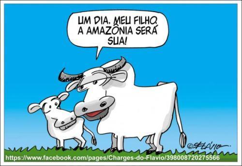 boi na Amazônia