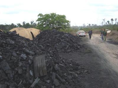 Carvão ilegal. Foto de arquivo MMA