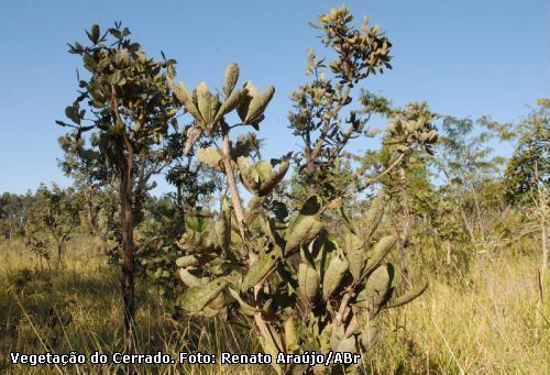 Imagem da vegetação do Cerrado. Foto ABr