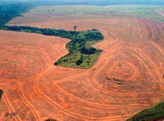 desmatamento x agricultura