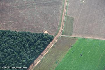 agricultura x desmatamento