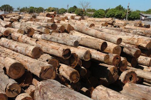 madeira de desmatamento ilegal