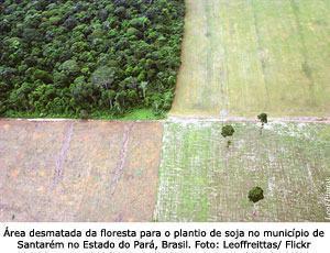 área desmatada da floresta para plantio de soja