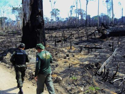 Desmatamento - Foto Ibama