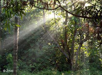 floresta e desmatamento