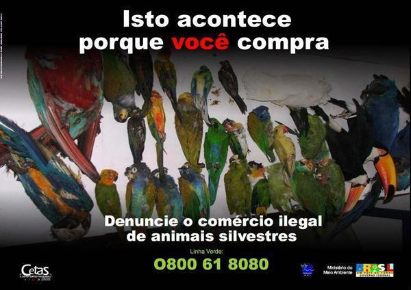 comércio ilegal de animais silvestres