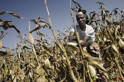 fundamentos ecológicos que apoiam a segurança alimentar estão em risco