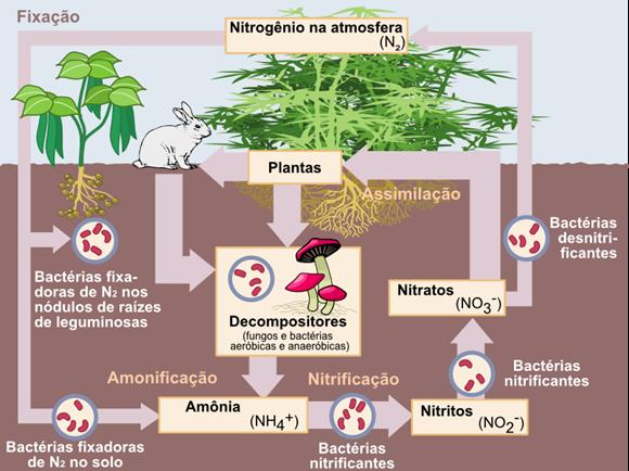 ciclo de nitrogênio