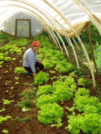 Produção orgânica no Assentamento Sepé Tiaraju