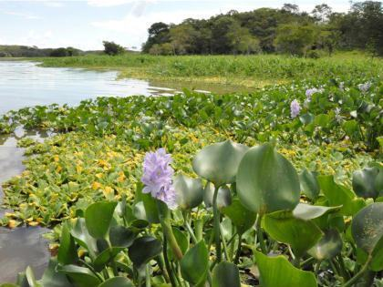 Pantanal. Foto: MCT