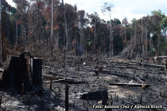 queimada e desmatamento