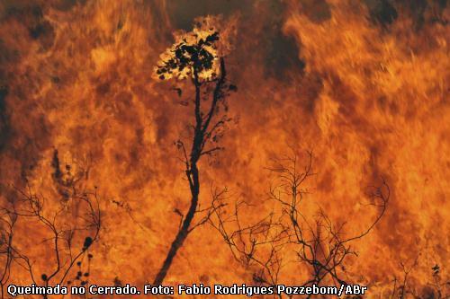 queimada no Cerrado