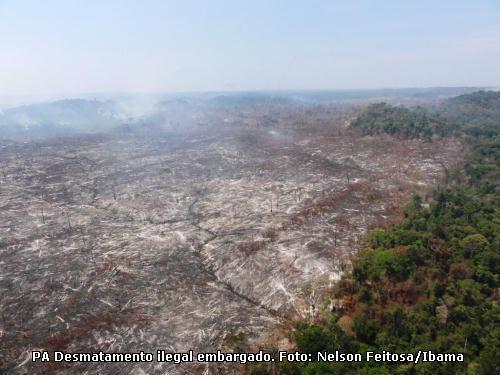 Reflorestamento de áreas degradadas da Amazônia