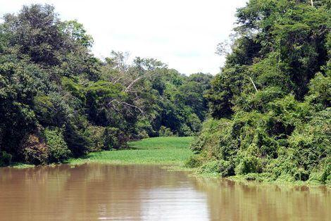 rio amazônia