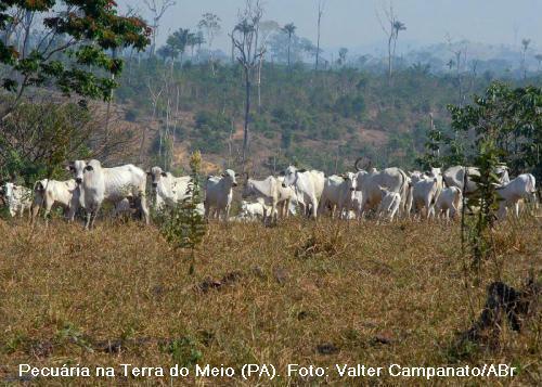 pecuária na Amazônia