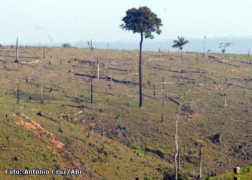 desmatamento na Amazônia cresce em 2019