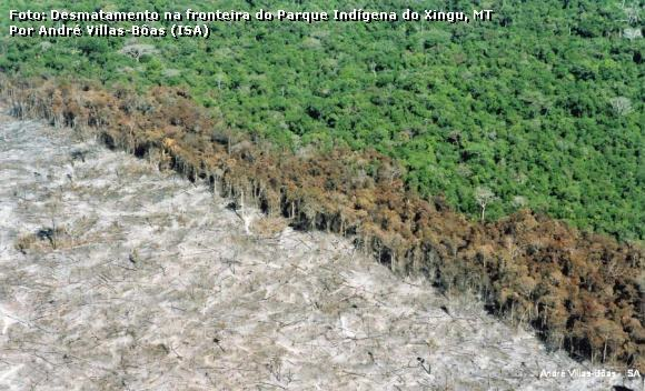 Destruição florestal na Amazônia,Destruição florestal na Amazônia segue níveis alarmantes em meio a pandemia,Amazônia,desmatamento na Amazônia
