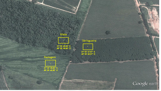 Figura 1. Áreas selecionadas para estudo sobre o impacto do cultivo de seringueira no município de Planalto/SP.