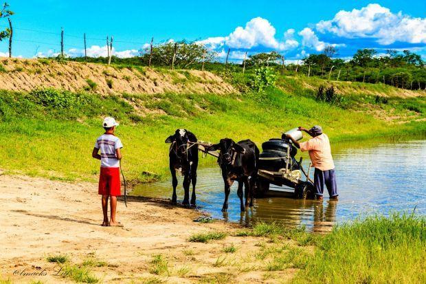 Foto 5 – Agricultor familiar abastece pipa em carro de boi em barramento nas nascentes do rio Pajéu em Brejinho - PE