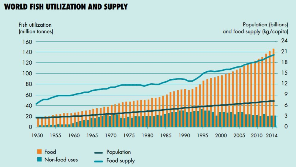 world fish utilization and supply