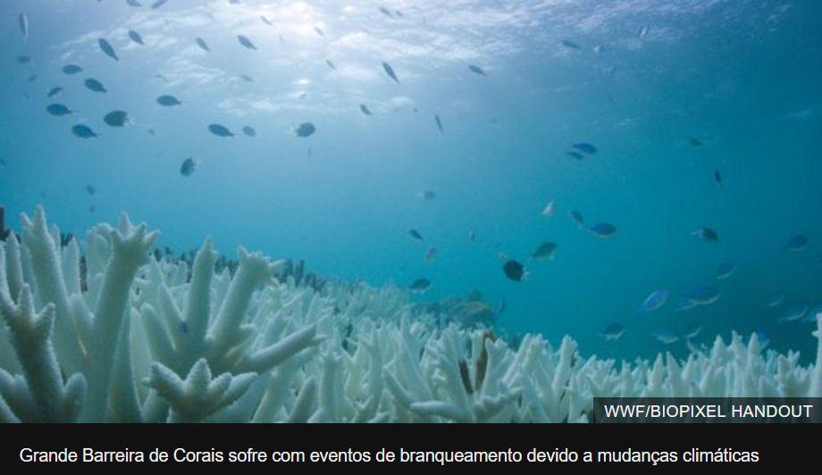 Grande Barreira de Corais sofre com eventos de branqueamento devido a mudanças climáticas