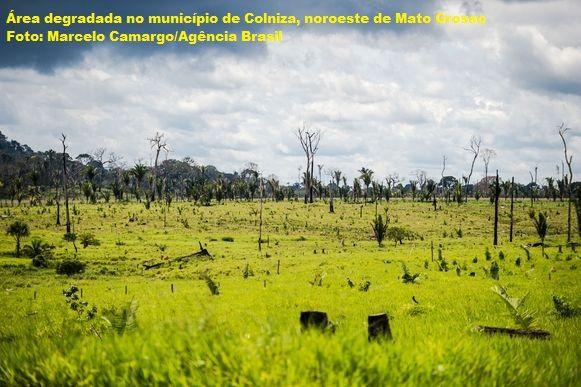 Desmatamento, aumento do desmatamento, Bolsonaro desmatamento, Bolsonaro, desmatamento