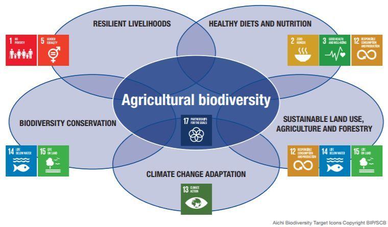 biodiversidade agrícola