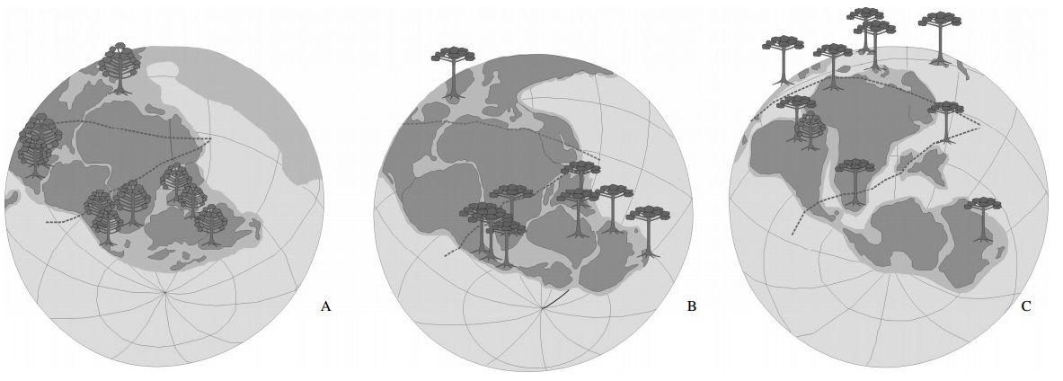 Distribuição paleográfica das coníferas Araucariaceae durante o Mesozoico