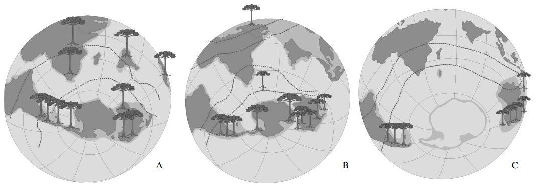 Distribuição paleográfica das Araucariaceae