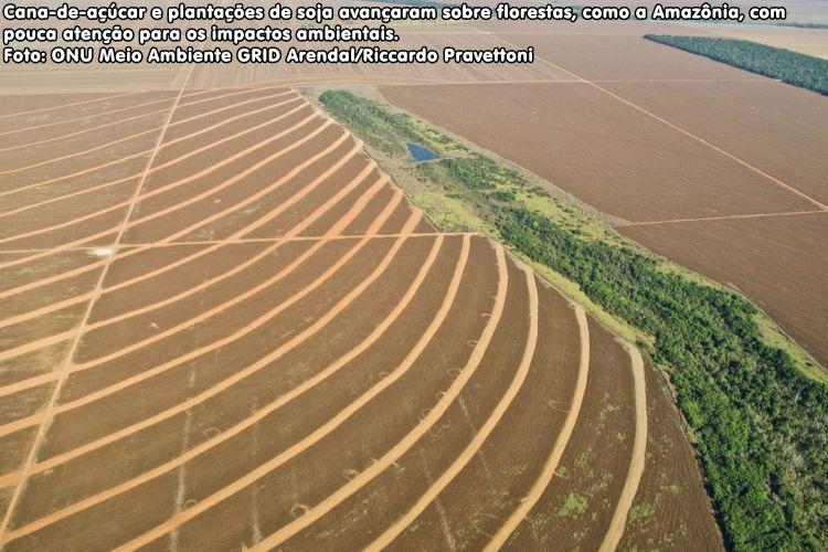 Cana-de-açúcar e plantações de soja avançam sobre florestas, como a Amazônia