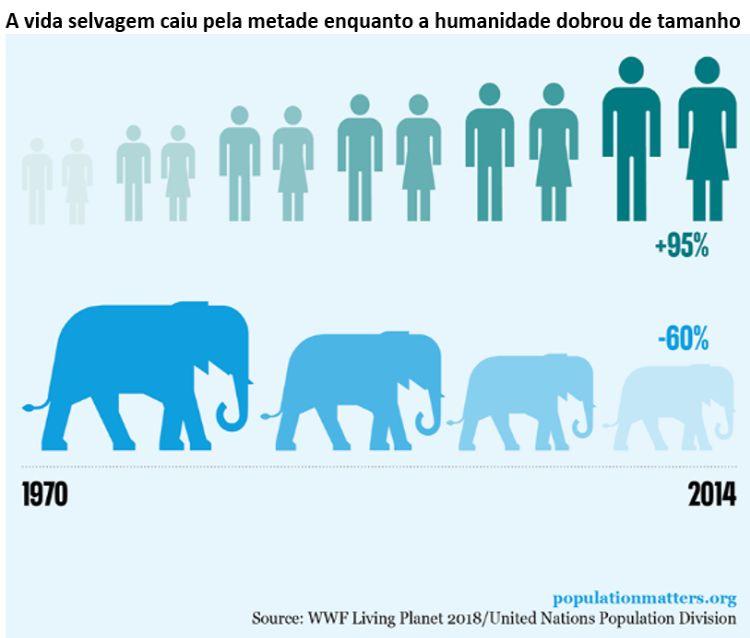a vida selvagem caiu pela metade enquanto a humanidade dobrou de tamanho