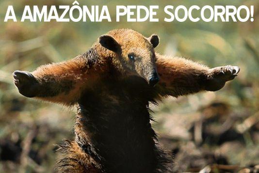 Amazônia pede socorro