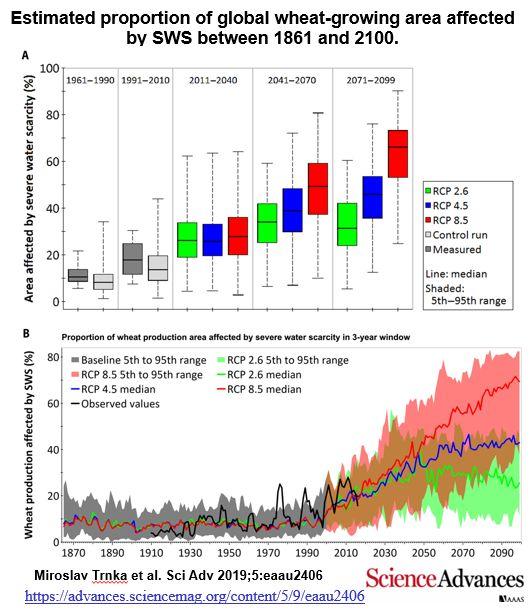 aquecimento global e as secas podem reduzir a produção global de trigo,aquecimento global,secas,produção global de trigo,aquecimento global ameaça a produção global de trigo,produção de trigo,crise na produção de trigo