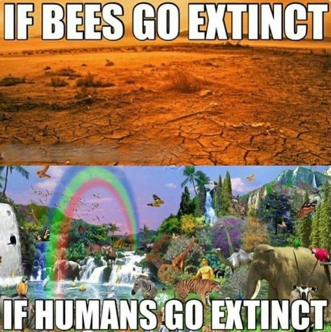 extinção das abelhas e a extinção humana