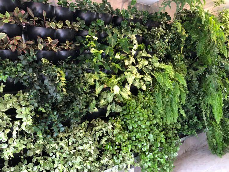 plantas que filtram o ar