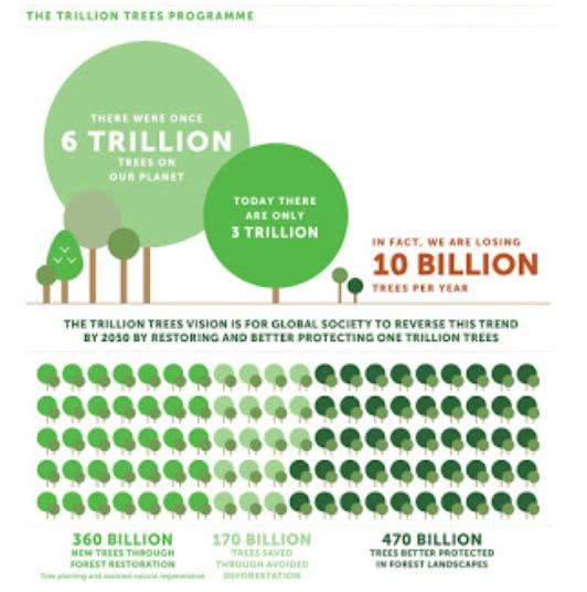 O número de árvores no mundo hoje em dia está em torno de três trilhões de unidades