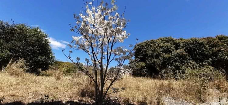 As belas paisagens caatingueiras do sertão semiárido têm direito a cuidados e proteção!