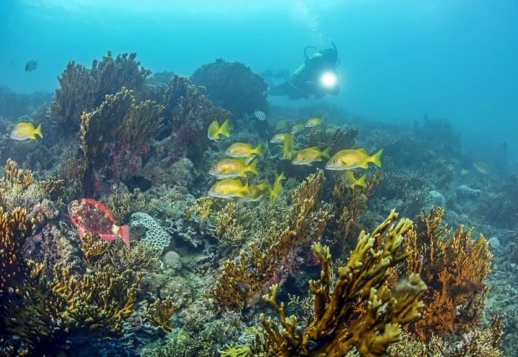 recife de fora, foto enrico marcovaldi concurso coral vivo