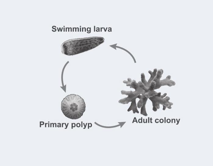 210506a célula de corais de pedra