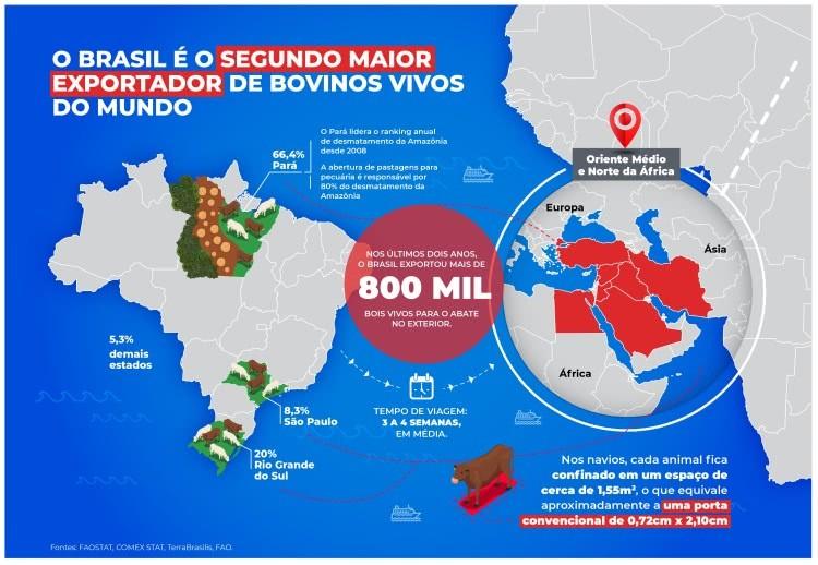infográfico exportação animais vivos