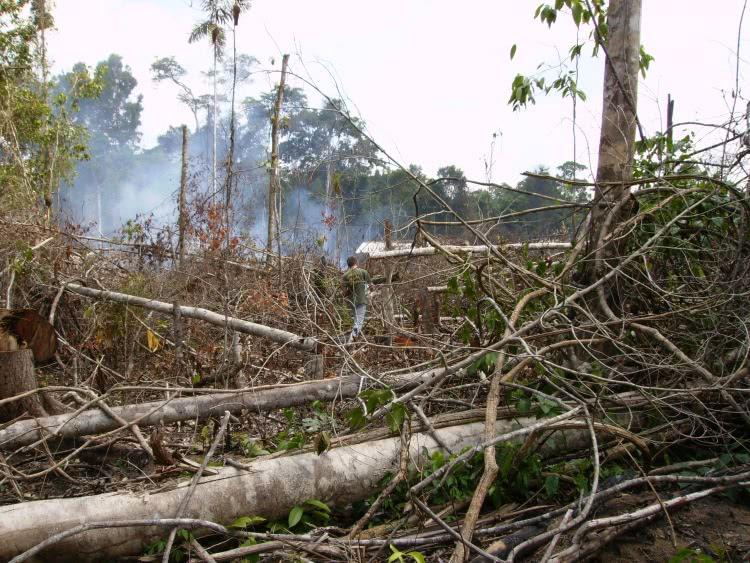desmatamento flagrado pelo ibama
