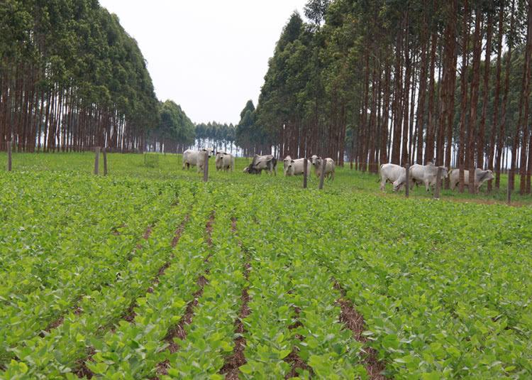 integração lavoura pecuária floresta